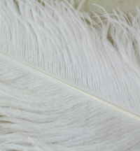 Male Ostrich Feathers