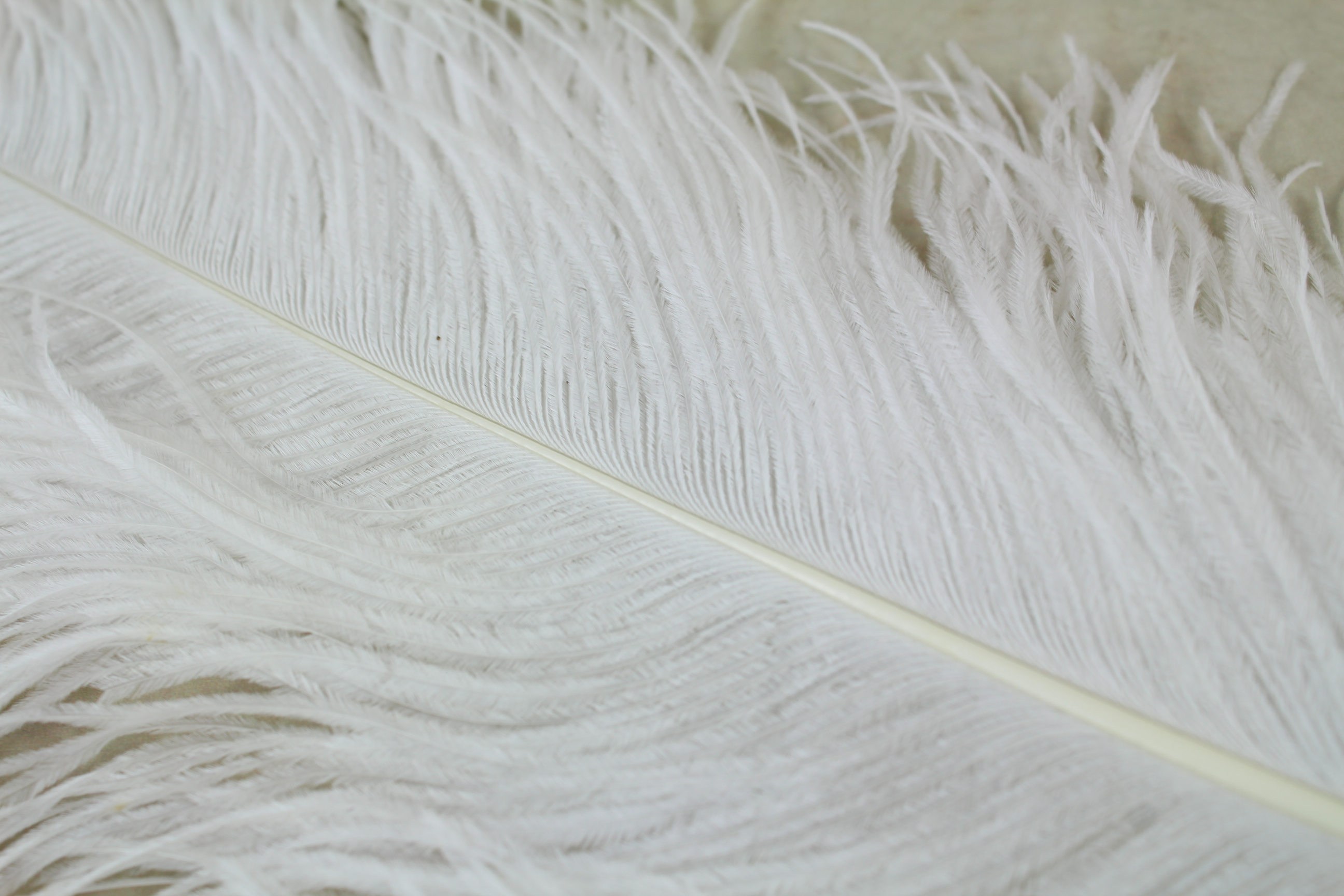 10 x Male Ostrich Plumes