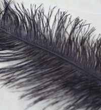 10-x-black-ostrich-feather-tails