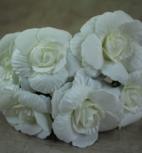 24-x-7cm-foam-camelia-bunch-x-6-heads