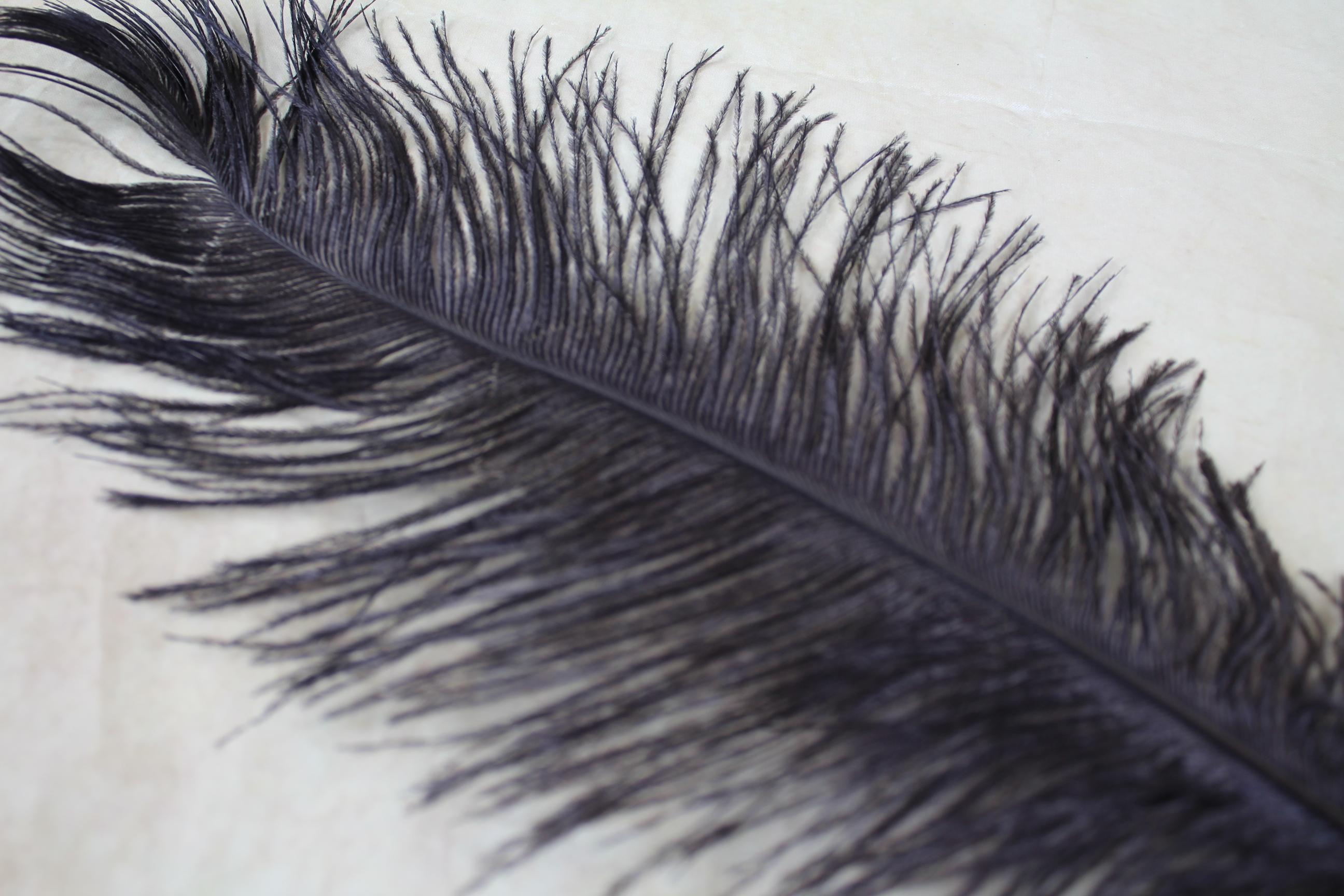 10 x black ostrich feather tails