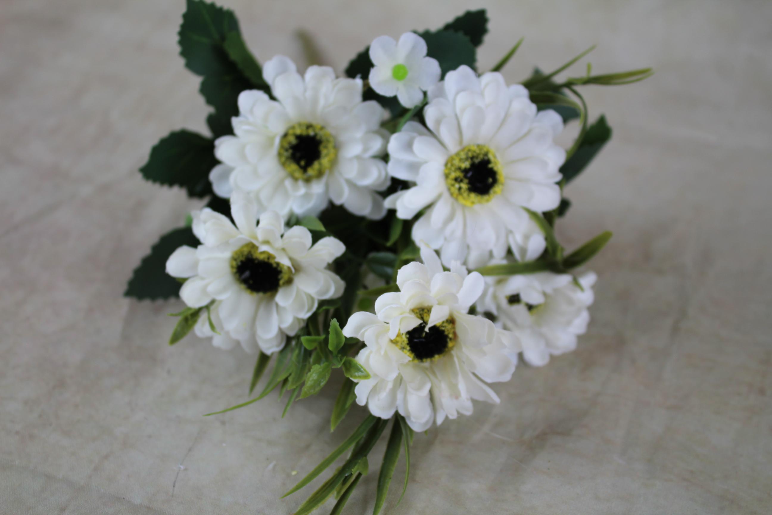 12 x 30cm daisy bush x 7